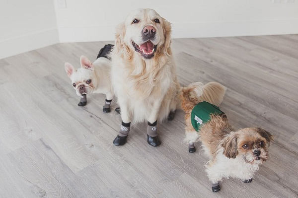Dog socks to prevent scratching floors