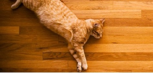 Are hardwood floors bad for cats