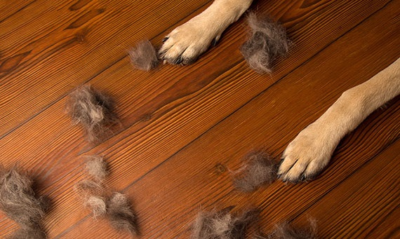 Best way to keep hardwood floors clean with pets