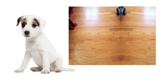 How to protect hardwood floors from dogs nails